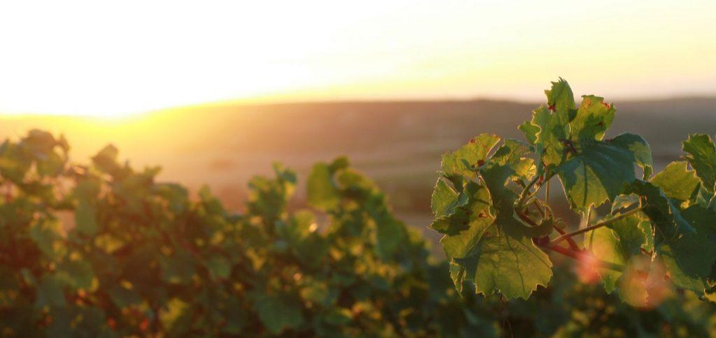 Wein: Nachhaltigkeit heißt auch Qualität