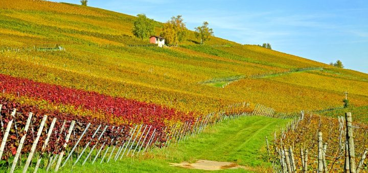 Drones: winegrowers' airborne assistants
