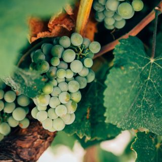 Natural wine: Nature as a trend