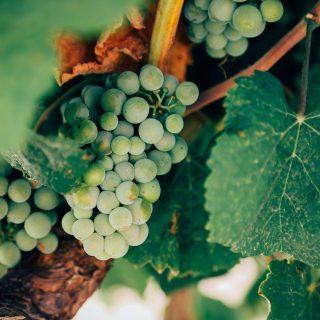 Naturwein: Zurück zur Natur liegt im Trend