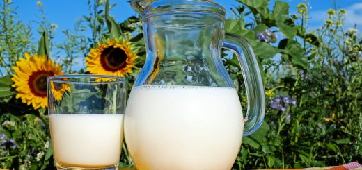 A jug and a glass of milk in front of sunflowers