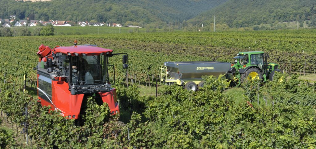 2018 promises to be a good year for the grape harvest